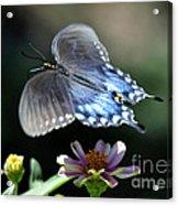 Oh Heavenly Garden Acrylic Print