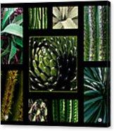 Oh My Cacti Acrylic Print