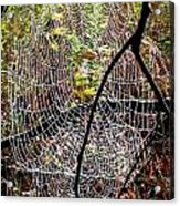 Oh What A Web We Weave Acrylic Print