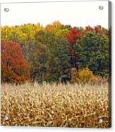 Ohio In November Acrylic Print by Andrea Dale