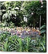 Oil Painting - A Number Of Flamingos Surrounded By Greenery In Their Enclosure  Acrylic Print