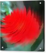Oil Painting - A Spinning Effect To A Flower Acrylic Print