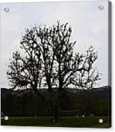 Oil Painting - An Old Tree In The Middle Of A Garden And Playground Acrylic Print
