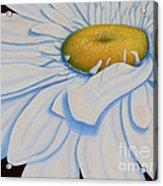 Oil Painting - Daisy Acrylic Print