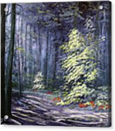 Oil Painting - Forest Light Acrylic Print