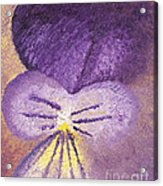 Oil Painting Of Pansy - Viola Tricolor Acrylic Print