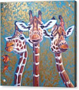 Oil Painting Of Three Gorgeous Giraffes Acrylic Print