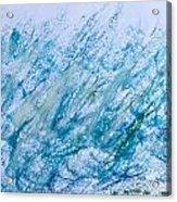 Oil Pastel Marks Acrylic Print by Tom Gowanlock