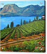 Okanagan Vineyard Acrylic Print