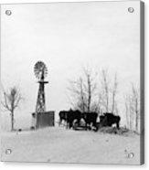 Oklahoma Dust Bowl, 1936 Acrylic Print