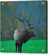 Okonoluftee Elk Acrylic Print