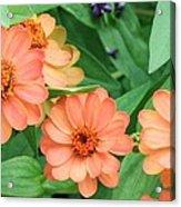 Olbrich Garden View 2 Acrylic Print
