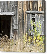 Old Barn In Fall Maine Acrylic Print