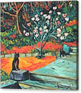 Old Bear Cat And Blooming Magnolia Tree Acrylic Print