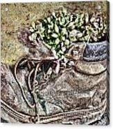 Old Boot Flowerpot Acrylic Print