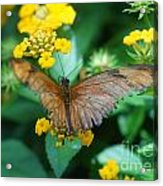 Old Butterfly Acrylic Print