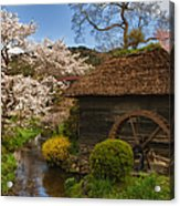 Old Cherry Blossom Water Mill Acrylic Print
