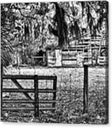 Old Chisolm Island Barn Acrylic Print by Scott Hansen