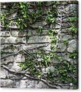 Old Coquina Wall Acrylic Print