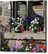 Old Cottage Flowers Acrylic Print