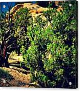 Old Desert Tree Number Two Acrylic Print