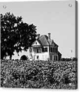 Old Farmhouse Surrounded By Cotton Acrylic Print