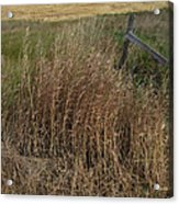 Old Fence Line Acrylic Print