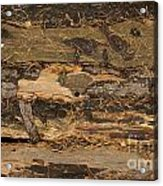 Old Forest Boards Acrylic Print