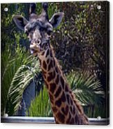 Old Funny Face Acrylic Print