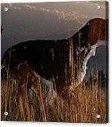 Old Hunting Dog Acrylic Print