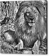 Old King In Black And White Acrylic Print