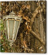 Old Lamp Hanging On Tree  Acrylic Print