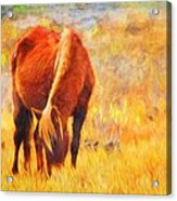 Old Mare Acrylic Print