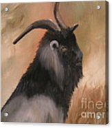 old Mcdonalds Goat Acrylic Print by Sharon Burger