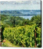 Old Mission Peninsula Vineyard Acrylic Print