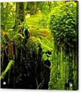 Old Mossy Stump Acrylic Print