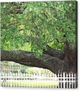 Old Oak Acrylic Print by Kevin Croitz