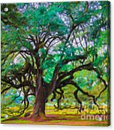 Old Plantation Oak Acrylic Print