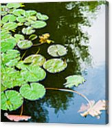 Old Pond - Featured 3 Acrylic Print