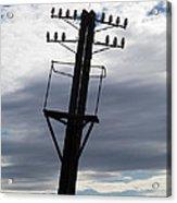 Old Power Pole Acrylic Print