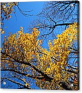 Old Rag Hiking Trail - 121217 Acrylic Print