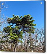 Old Rag Hiking Trail - 121242 Acrylic Print by DC Photographer
