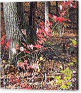 Old Rag Hiking Trail - 12125 Acrylic Print