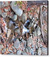 Old Rag Hiking Trail - 121257 Acrylic Print