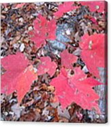 Old Rag Hiking Trail - 121260 Acrylic Print