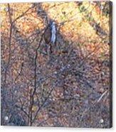 Old Rag Hiking Trail - 121264 Acrylic Print