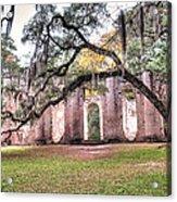 Old Sheldon Church - Bending Oak Acrylic Print