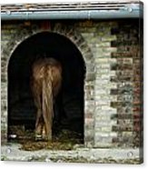 Old Stable Acrylic Print
