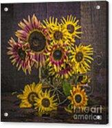 Old Sunflowers Acrylic Print