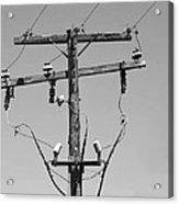 Old Telephone Pole Acrylic Print